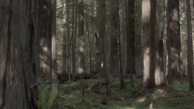 pan left to right of person in jumpsuit running through woods or forest towards camera. person jumps over fallen trees.  stunts. ferns and plants visible. - jumpsuit stock videos and b-roll footage
