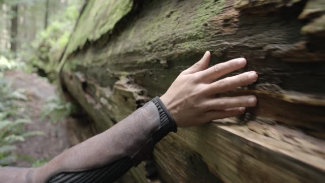 close angle of hand touching bark of fallen tree. could be woods or forest. - fallen tree stock videos and b-roll footage