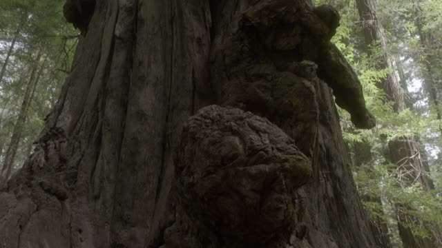close angle of knot or root on tree. could be tree stump or bark. could be woods or forest. - ceppaia video stock e b–roll
