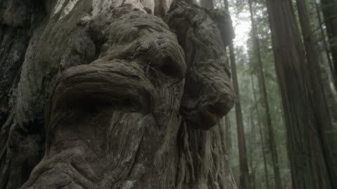 close angle of knots or roots in base of tree. could be forest or woods. - baumstumpf stock-videos und b-roll-filmmaterial