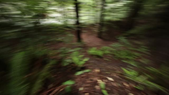 hand held medium angle moving through woods or forest. fallen trees, trees, branches, plants, and ferns visible. could be running. - mit handkamera stock-videos und b-roll-filmmaterial