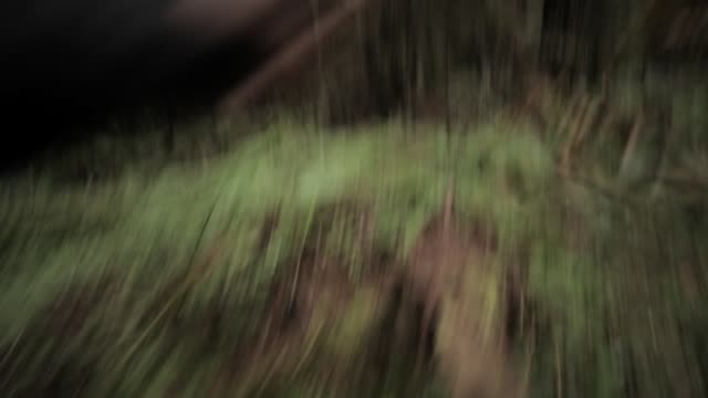 vidéos et rushes de hand held medium angle moving through woods or forest. fallen trees, trees, branches, plants, and ferns visible. could be running. - caméra à l'épaule