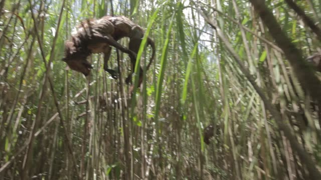 up angle moving pov of impaled wolves or dogs in bamboo forest. blood visible. - bamboo plant video stock e b–roll