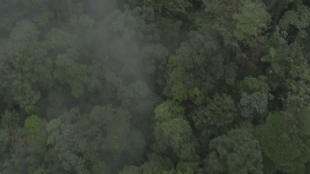 aerial of jungle, forest, rainforest, or wood. - costa rica video stock e b–roll