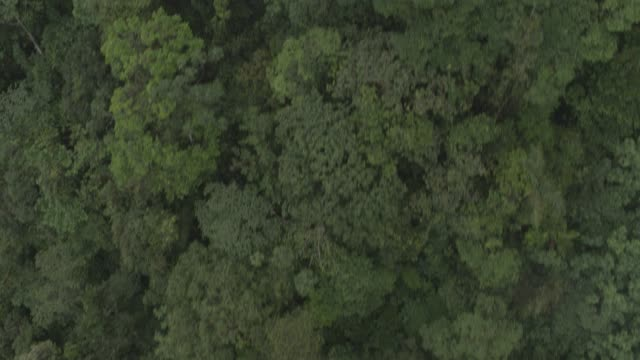 aerial of jungle, forest, rainforest, or wood. - rainforest stock videos & royalty-free footage