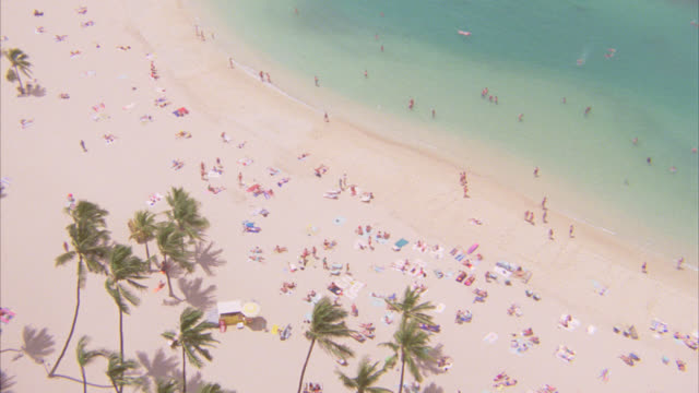 stockvideo's en b-roll-footage met aerial birdseye pov of large sandy beach with palm trees lots of people and sunbathers below pan up to mountain in distance above ocean. tropical. could be waikiki. - oahu