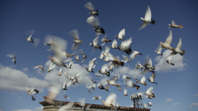 vidéos et rushes de up angle of pigeons or birds flying in air. blue sky and clouds. rooftop partially visible. - voler