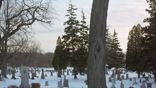 "pan down from treeline to graveyard or cemetery during winter - blanket of snow on ground. large tree in center of frame with sign that reads ""no dogs."" - cemetery stock videos & royalty-free footage"