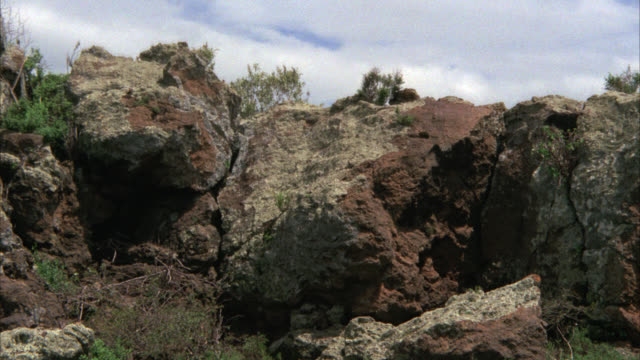 wide angle of a lioness jumping onto top of large rock or boulder. - boulder rock stock-videos und b-roll-filmmaterial