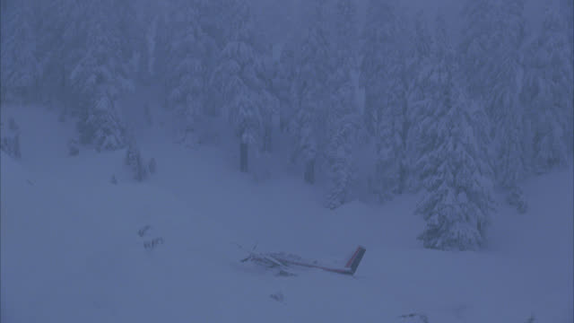 WIDE ANGLE OF TWIN ENGINE CESSNA AIRPLANE CRASH SITE IN SNOW. COULD BE PRIVATE OR CORPORATE JET. SEE FUSELAGE AND TAIL STICKING OUT OF SNOW. SNOW COVERED TREES AND FOREST OR WOODS IN BG. COULD BE IN MOUNTAINS.