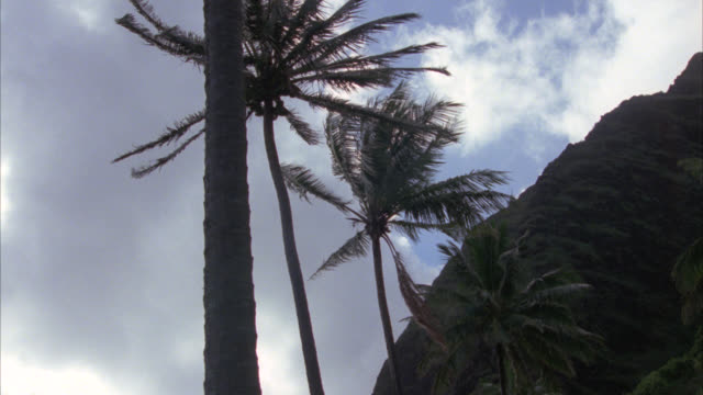 up angle of palm trees being blown by the wind. cliff and clouds moving across sky in bg. tropical. - pacific islands stock videos & royalty-free footage