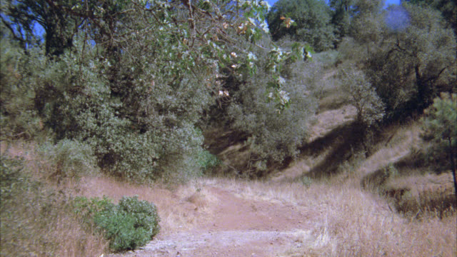 wide angle of horse drawn carriage on dirt road in wood or forest. pioneer carriage wagon wild west western - 1900 stock videos & royalty-free footage