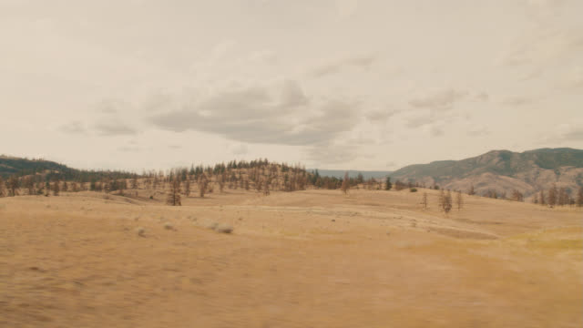 vídeos de stock, filmes e b-roll de process plate 3/4 left back of dry grass fields and meadows on hills in mountains or wilderness. pine trees of woods or forest. could be yellowstone national park. - placa de processo