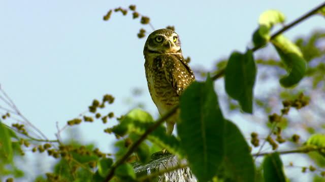 vídeos de stock, filmes e b-roll de serra do roncador - brazil - fauna silvestre