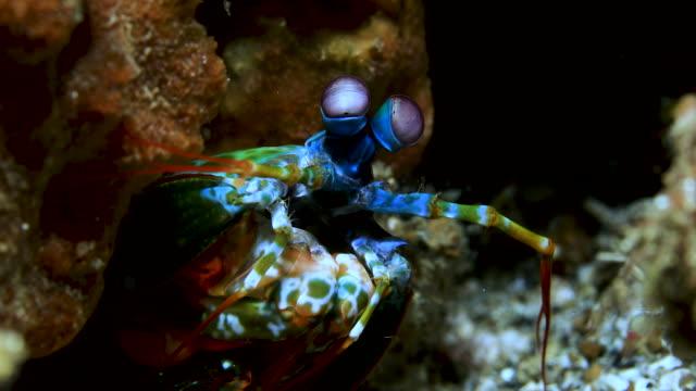 underwater macro 4k - nudibranch stock videos & royalty-free footage