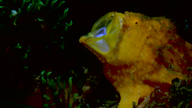 underwater macro 4k - nudibranch stock videos & royalty-free footage