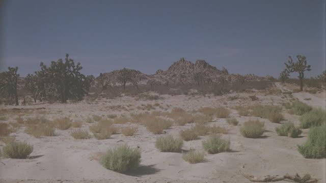 shooting to desert, shrubs and desert trees in the sand, scenic: desert: day location: palmdale - desert area video stock e b–roll