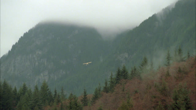 wide angle of yellow seaplane flying past mountains, pine trees. fog. airplane. forests. - propeller aeroplane stock videos & royalty-free footage