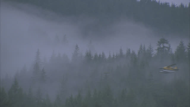 wide angle of yellow seaplane flying past mountains, pine trees. fog. airplane. forests. - プロペラ機点の映像素材/bロール