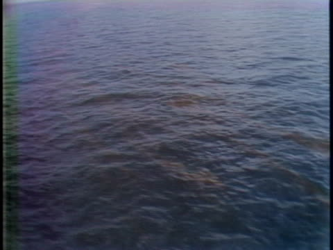 oil spill in gulf of mexico - gulf of mexico stock videos & royalty-free footage