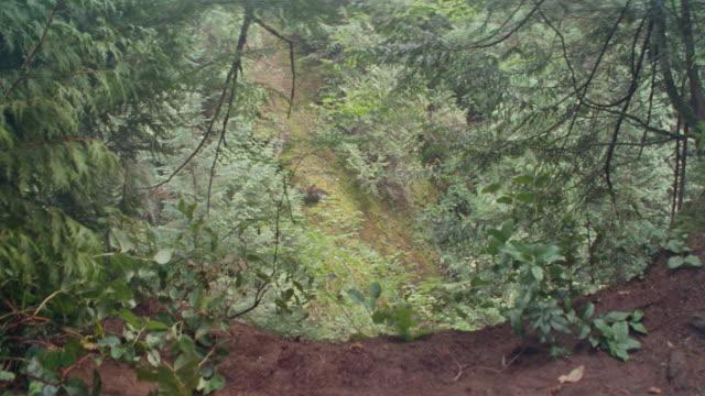 vidéos et rushes de dx-scenic woods/forest-points of view-scenic waterfalls-scenic cliffs - être perdu
