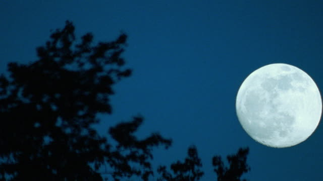 moons - full moon stock videos & royalty-free footage