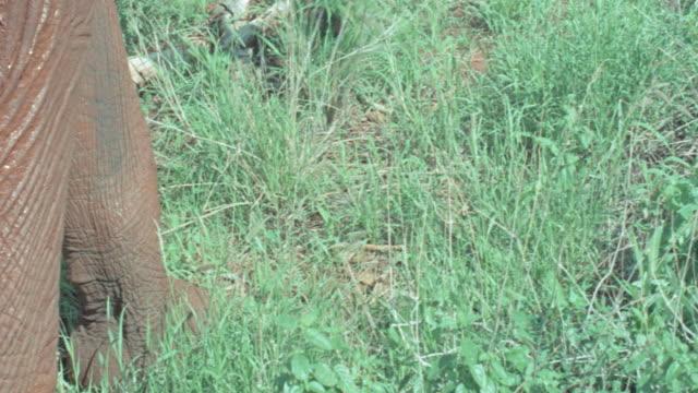 vidéos et rushes de dx - african animals - elephants - nez d'animal
