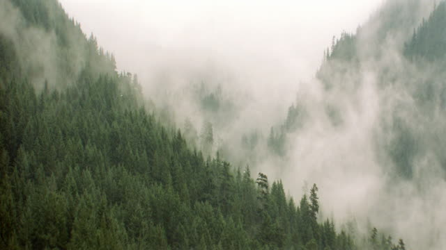 dx / dusk - scenic woods / forests - weather / fog / mist - tal stock-videos und b-roll-filmmaterial