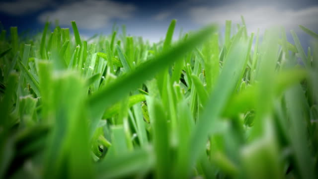 green grass - hd loop - landscaped stock videos and b-roll footage