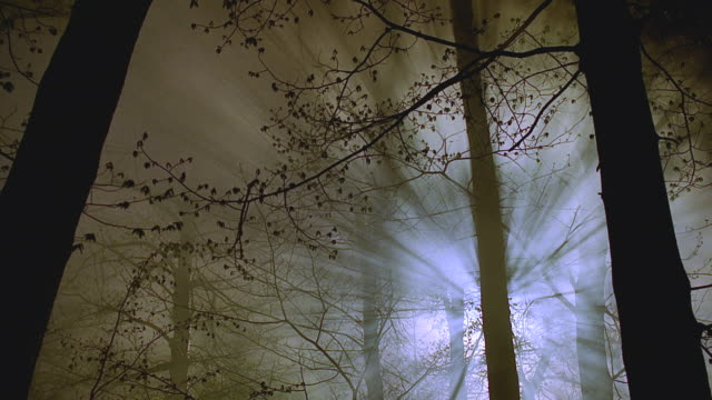 spooky misty woods - mystery stock videos & royalty-free footage