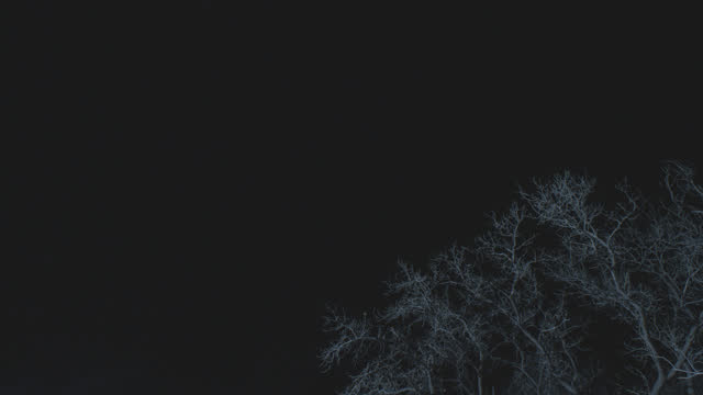up angle of bare tree branches in woods or forest. mist, fog, or frost visible in air. - bare tree stock-videos und b-roll-filmmaterial