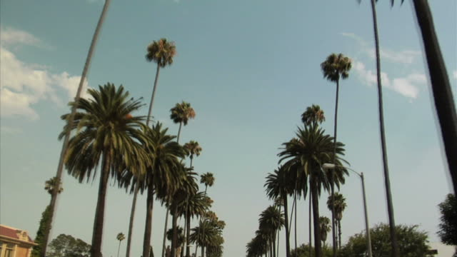 palm tree street - hollywood california stock videos & royalty-free footage