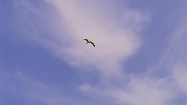 seagulls in flight - möwe stock-videos und b-roll-filmmaterial