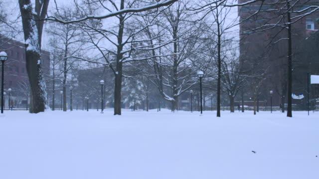 vídeos y material grabado en eventos de stock de university of michigan campus, snowing, w/activity - ann arbor