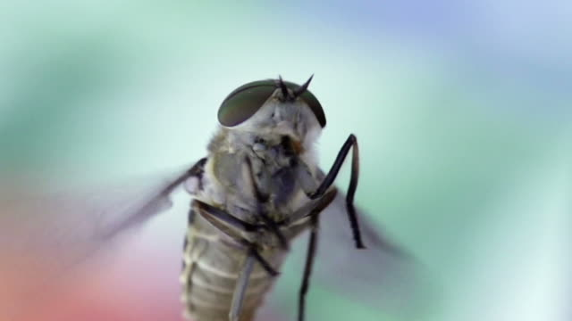 SLOW MOTION: FLY