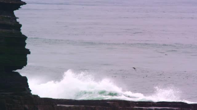 waves crash against rocky cliffs, ireland - vattenfågel bildbanksvideor och videomaterial från bakom kulisserna