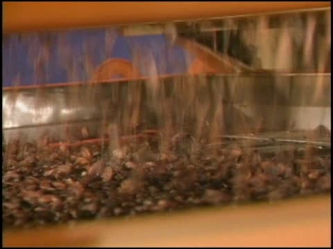 raw cocoa beans sorted in hershey's factory - chocolate factory stock videos & royalty-free footage