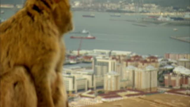 nnpr754j - gibraltar bildbanksvideor och videomaterial från bakom kulisserna