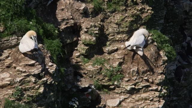 bempton cliffs - ベンプトン点の映像素材/bロール