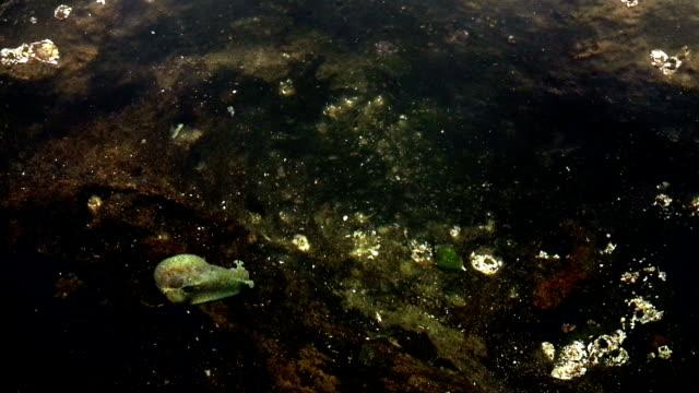caracol marino en montañita ecuador - caracol stock videos and b-roll footage