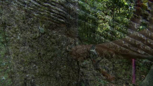 nnbk794n - rubber tree stock videos & royalty-free footage