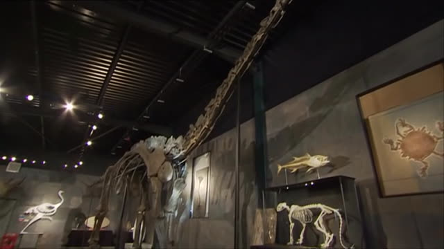 nnbk543k) - extinct stock videos & royalty-free footage