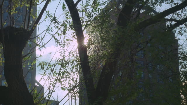time lapse sunrise thru trees; n-d brick bldgs. visible in b.g. - branch stock videos & royalty-free footage