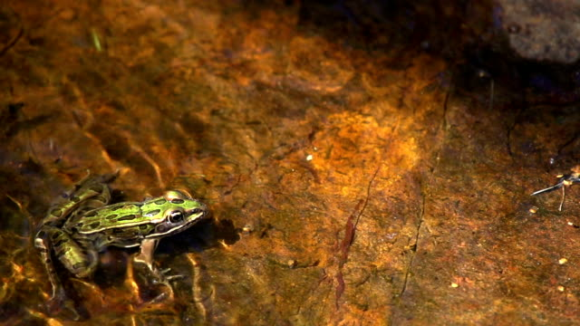 frog montage (slow motion) - pond stock videos & royalty-free footage