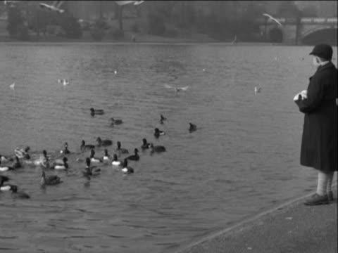 anb1670y) - aquatic organism stock videos & royalty-free footage