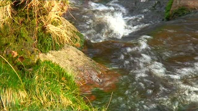 芝生の川岸 - 葉状体点の映像素材/bロール