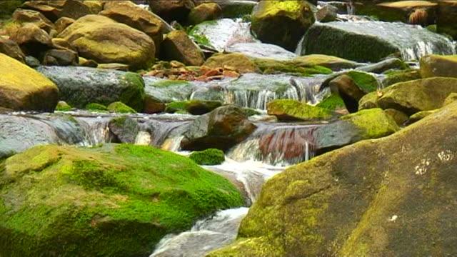 vidéos et rushes de rochers recouverts de mousse en stream - rocher