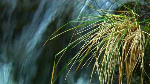 grass overhangs waterfall - yorkshire bildbanksvideor och videomaterial från bakom kulisserna