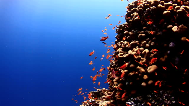 CORALS AND FISHES 2