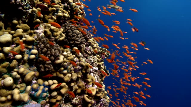 corals and fishes - school of fish stock videos & royalty-free footage